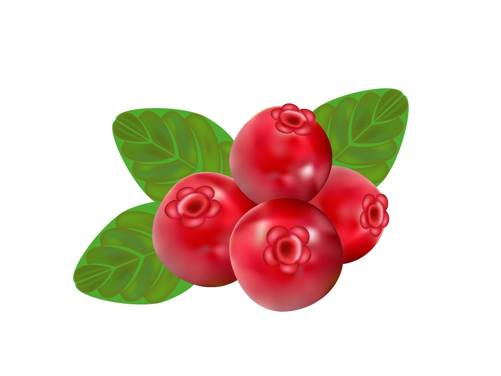 cranberry fruits
