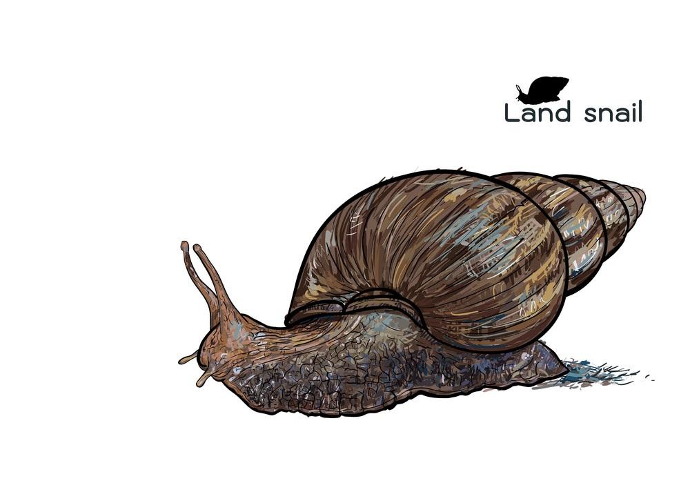 crawling land snail
