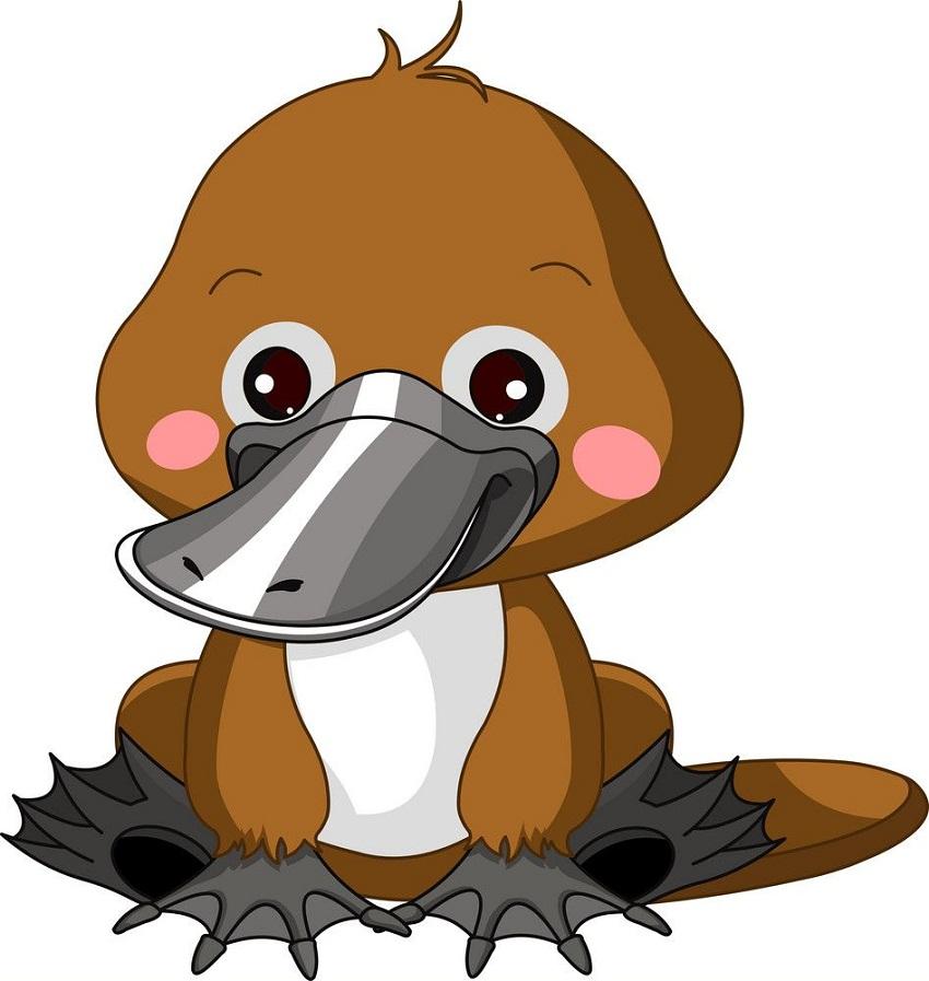 cute platypus sitting