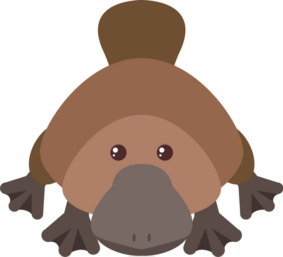 cute platypus with lovely eyes