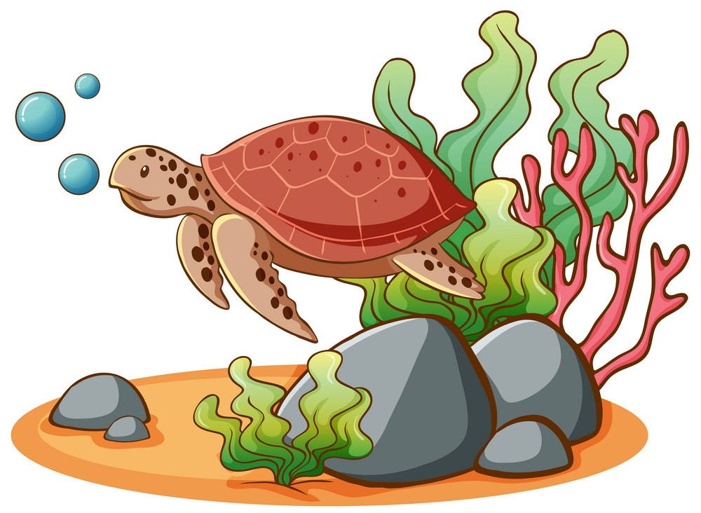 cute sea turtle swimming