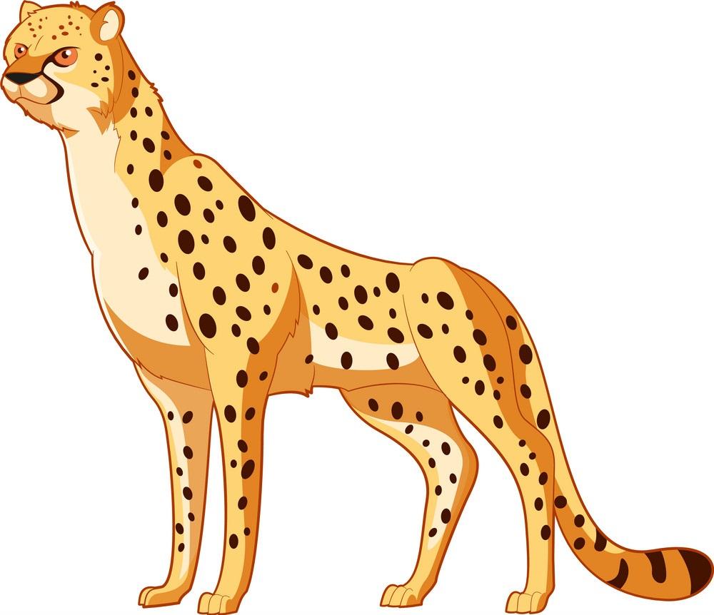 fantastic cheetah