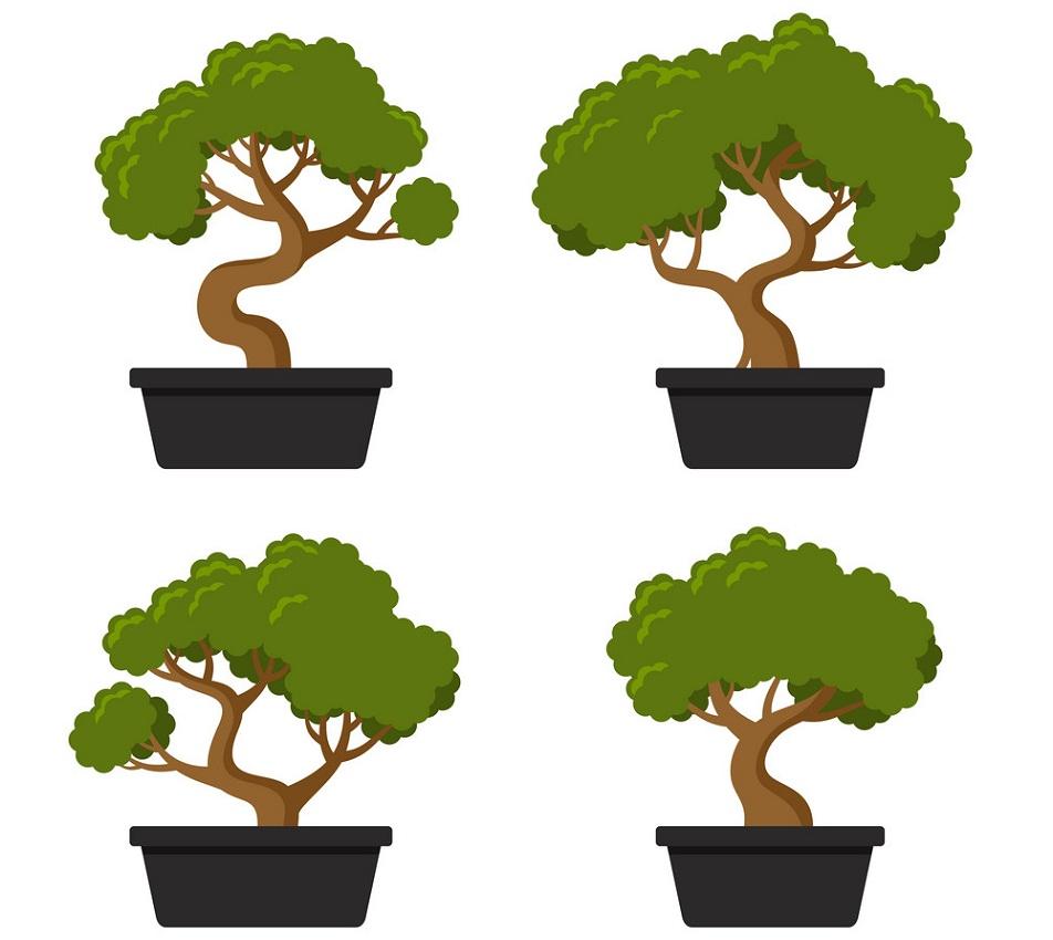 four bonsai trees