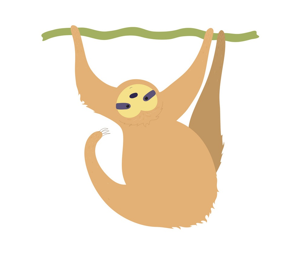 funny sloth hanging on a branch