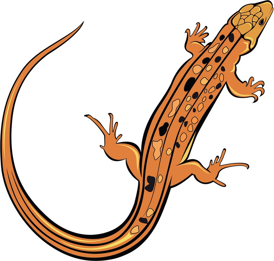 Lizard Clipart