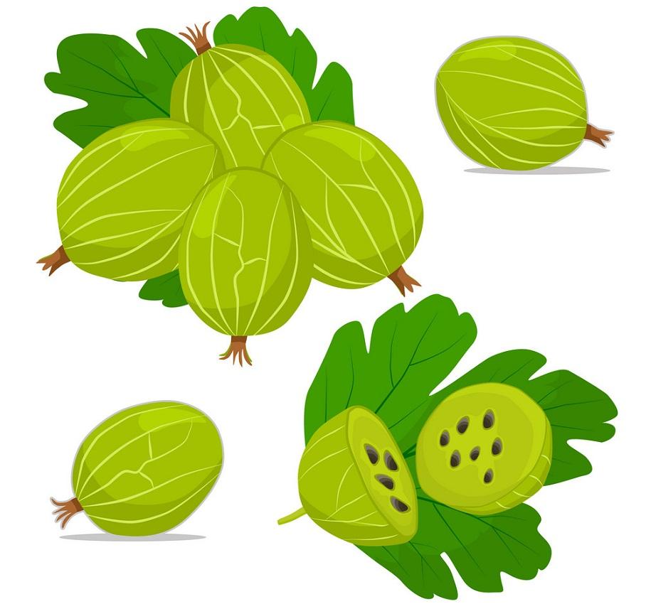 gooseberry fruits