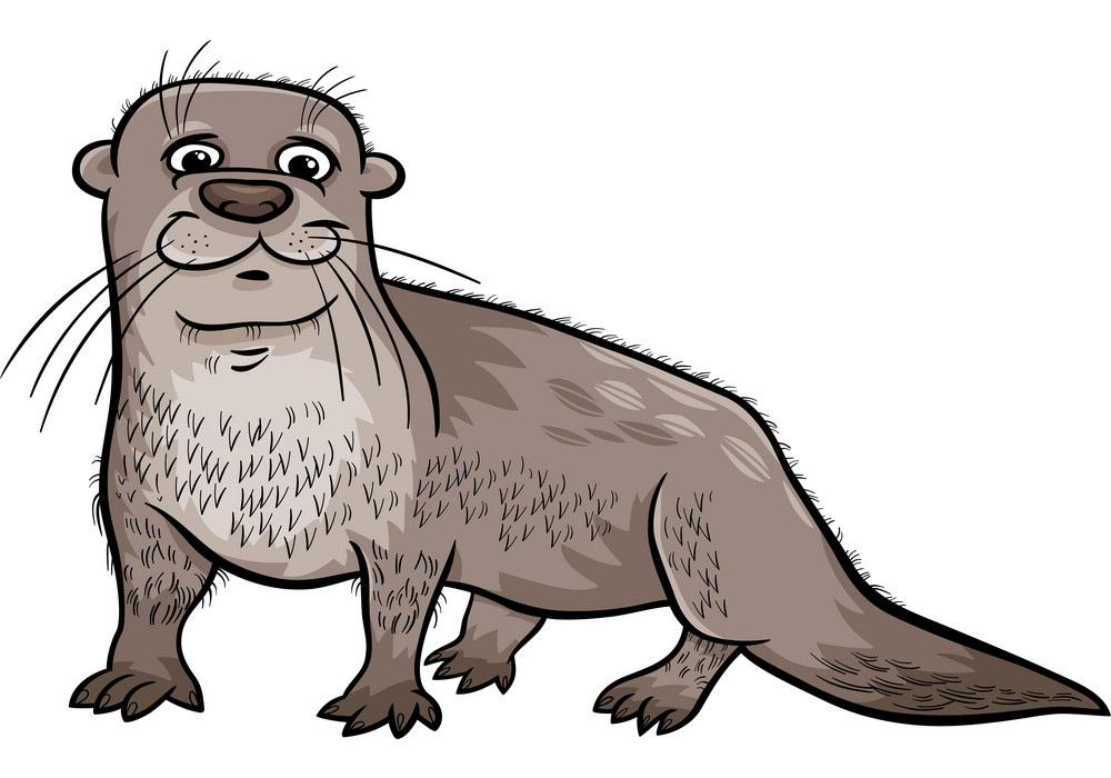 gray otter