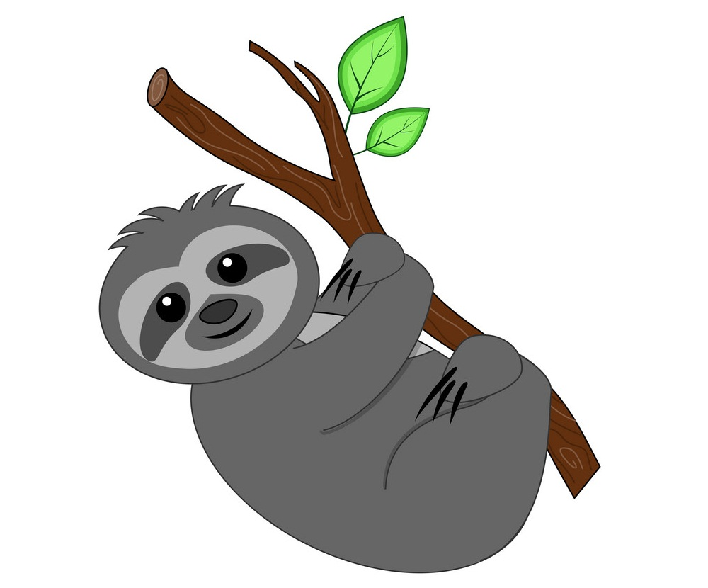 gray sloth on a branch