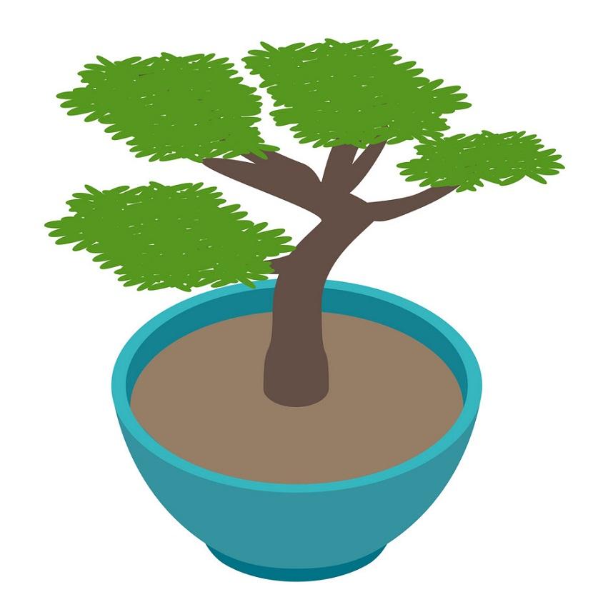hand drawn bonsai