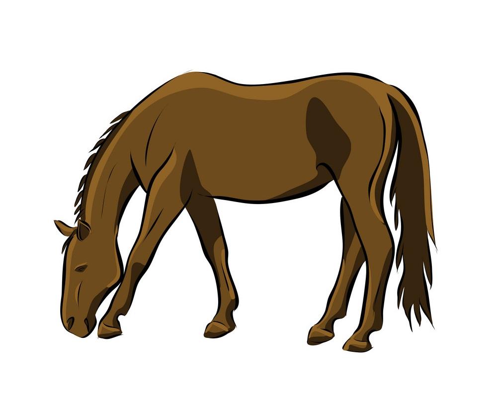 hand drawn brown horse