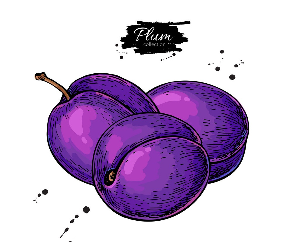 hand drawn plums