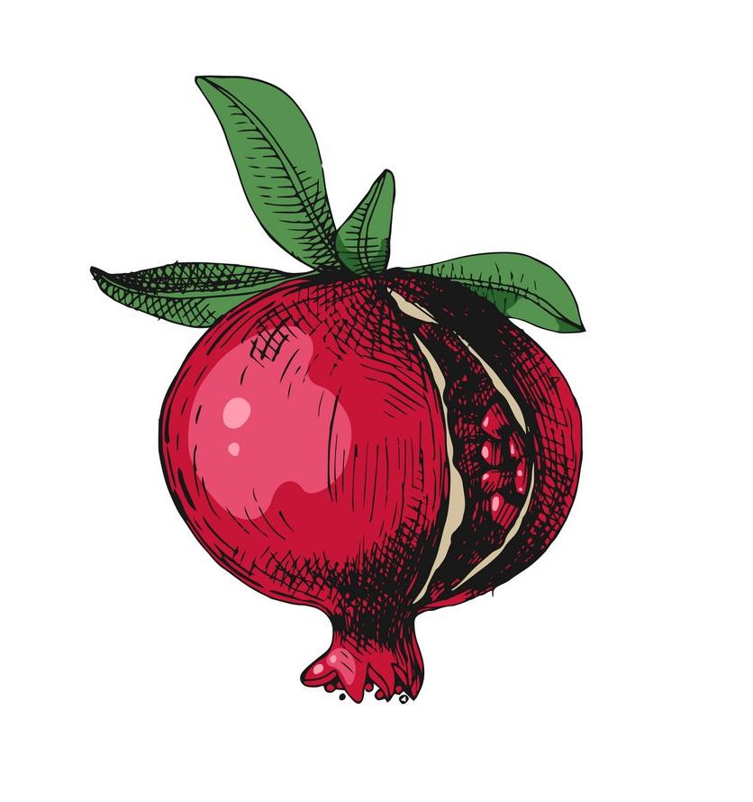 hand drawn pommegranate