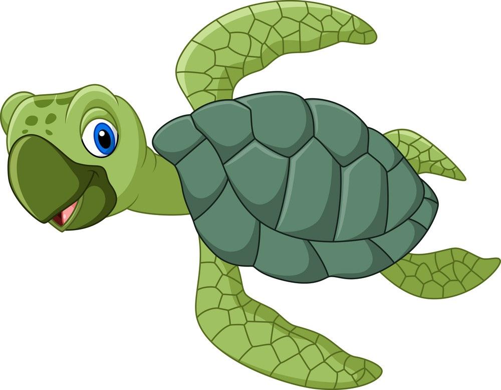 happy baby sea turtle