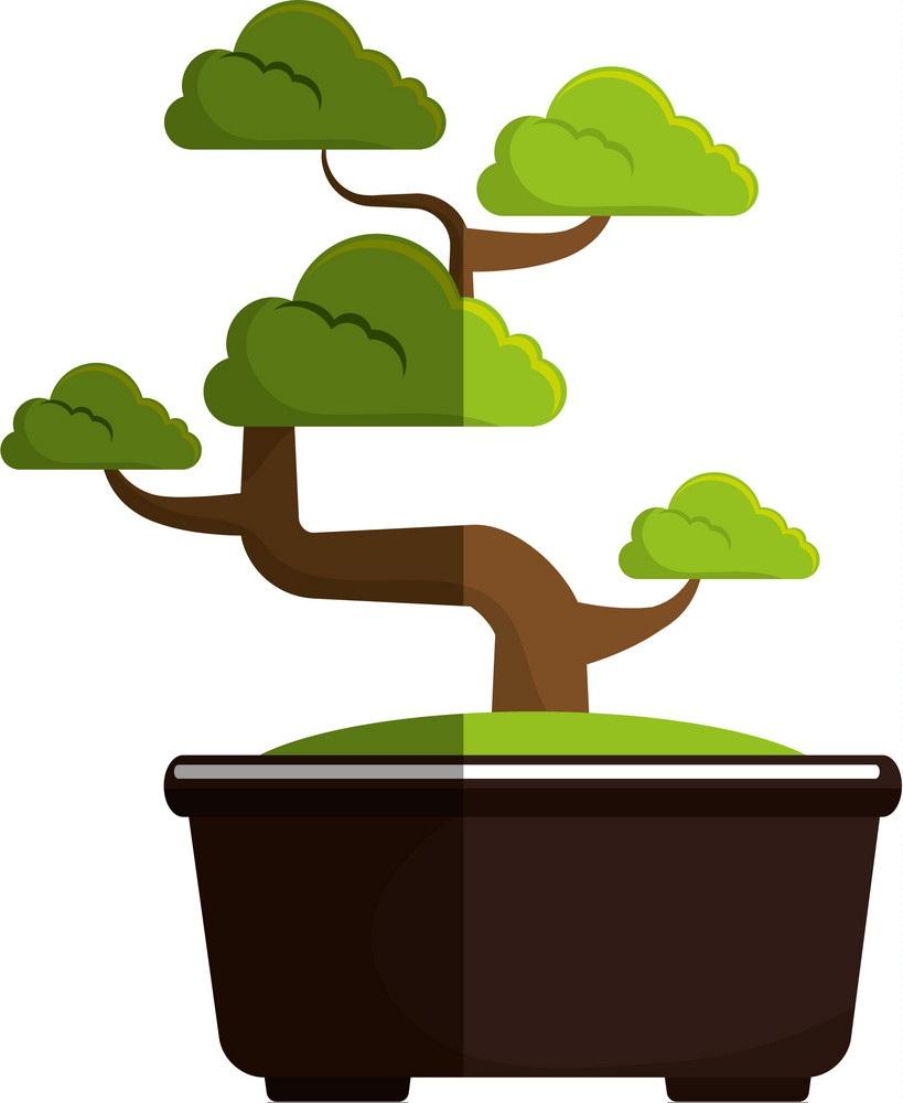 japanese bonsai tree 1