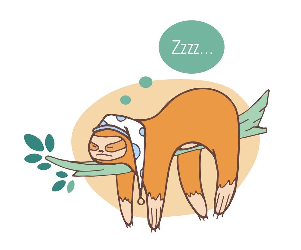 lazy sloth sleeping on a branch