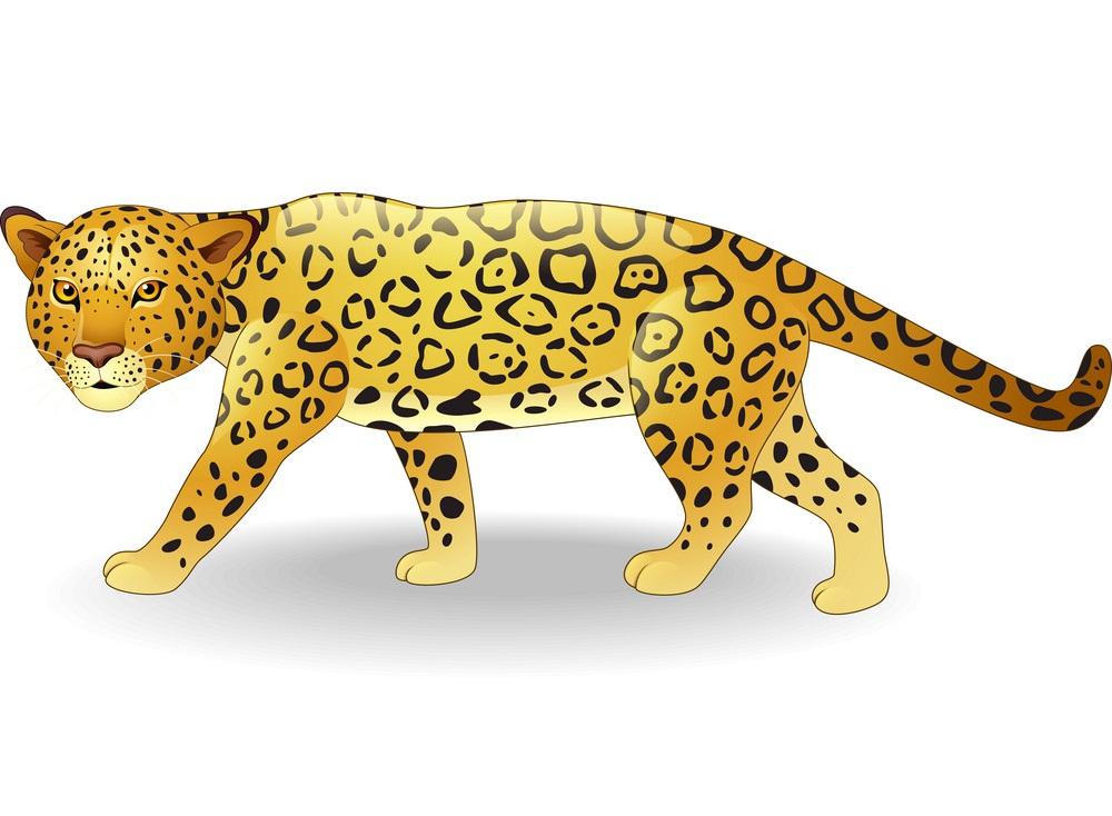 little cheetah