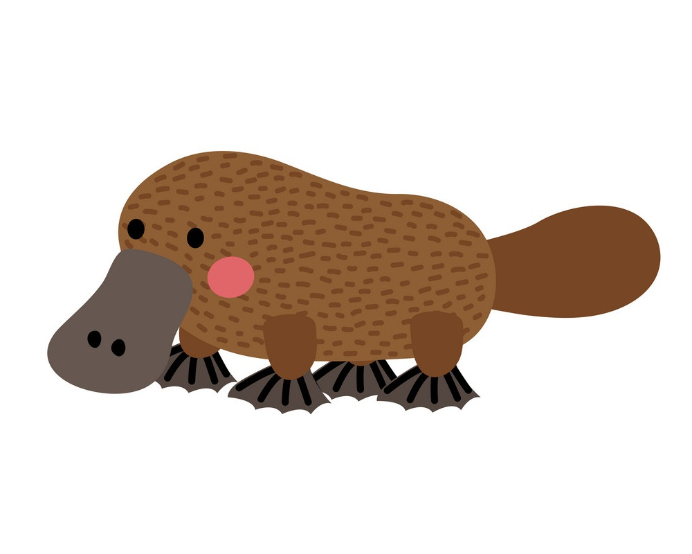 little platypus 1