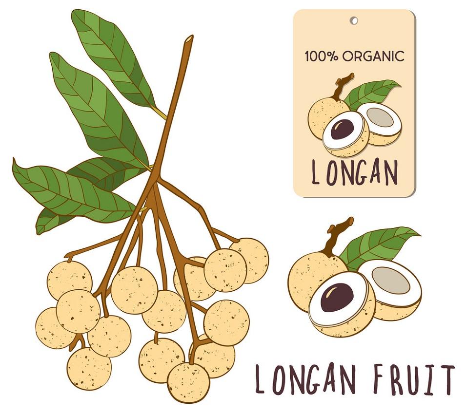 longan fruit 1