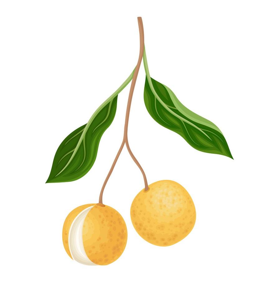 longan fruits 1