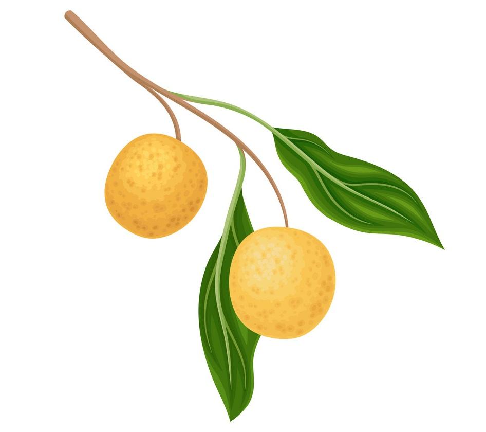 longan fruits 2