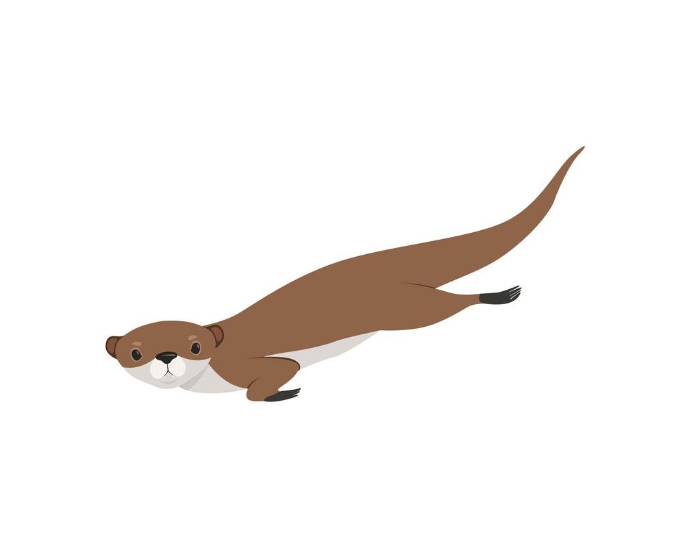 lovely brown otter swimming