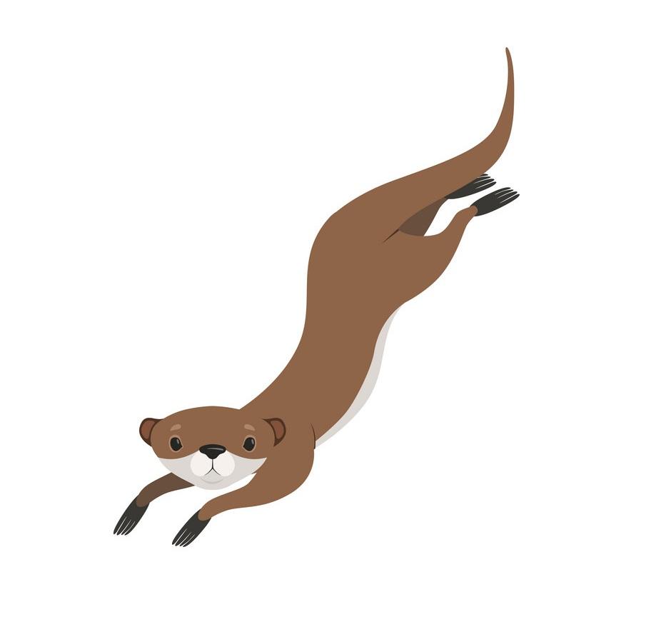 lovely brown otter