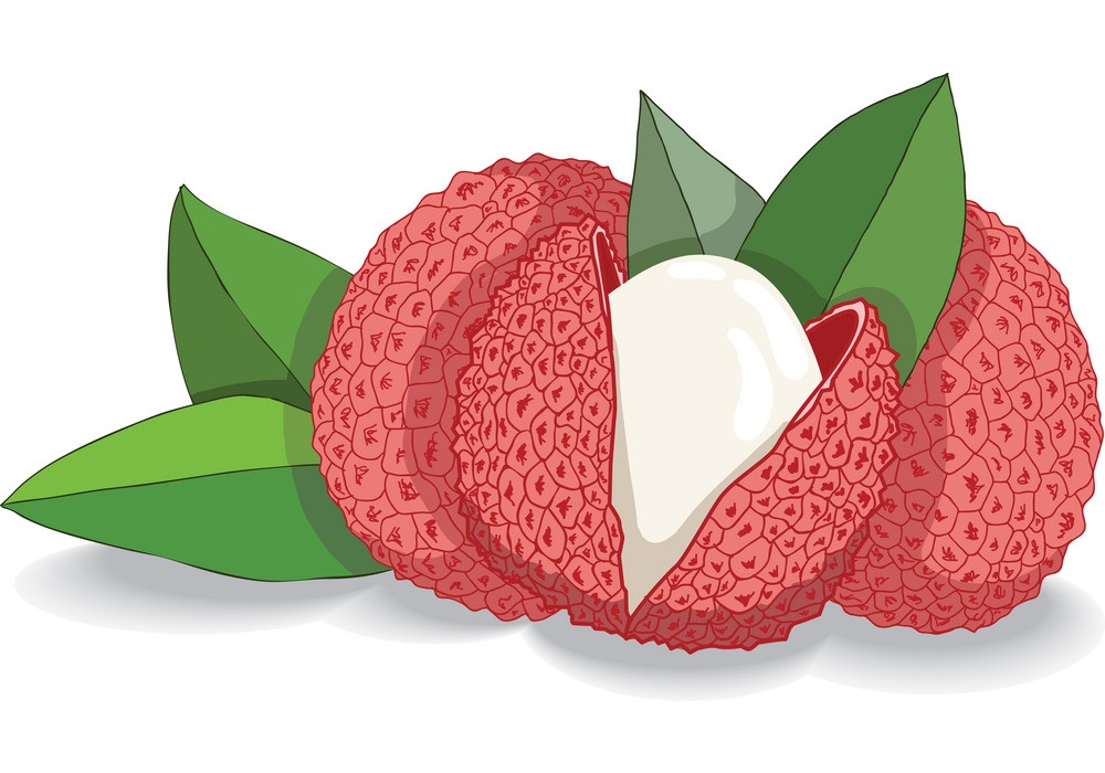 Lychee Clipart