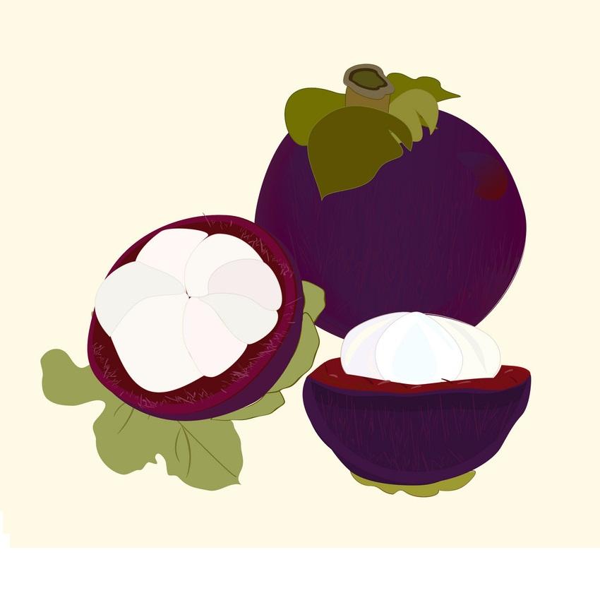 mangosteens fruit