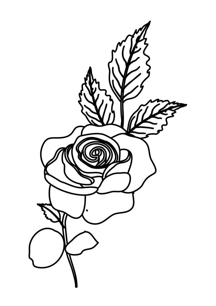 nature rose outline