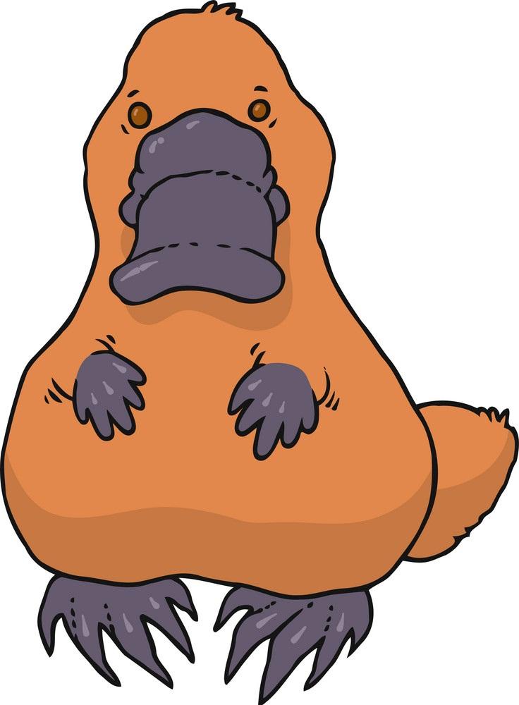 orange platypus
