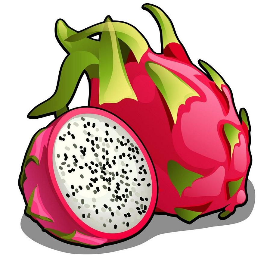 Dragon Fruit Clipart