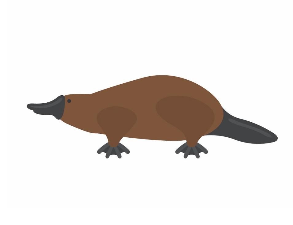 platypus flat design
