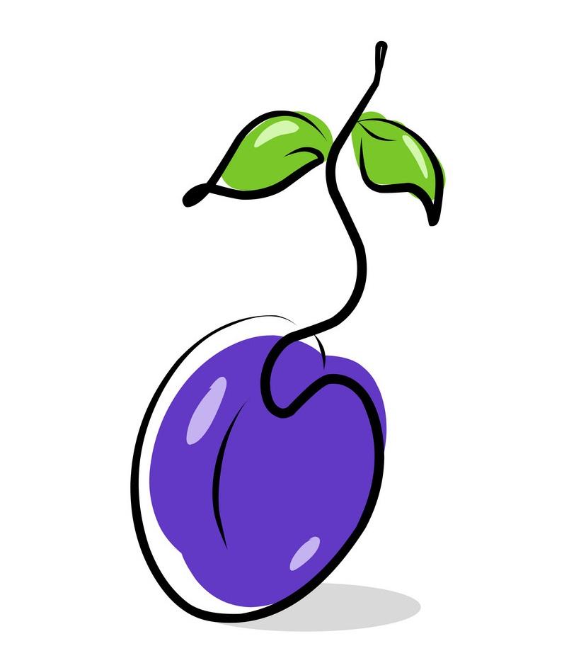 plum simple drawing