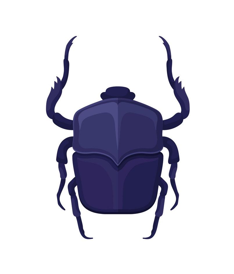 purple scarab beetle