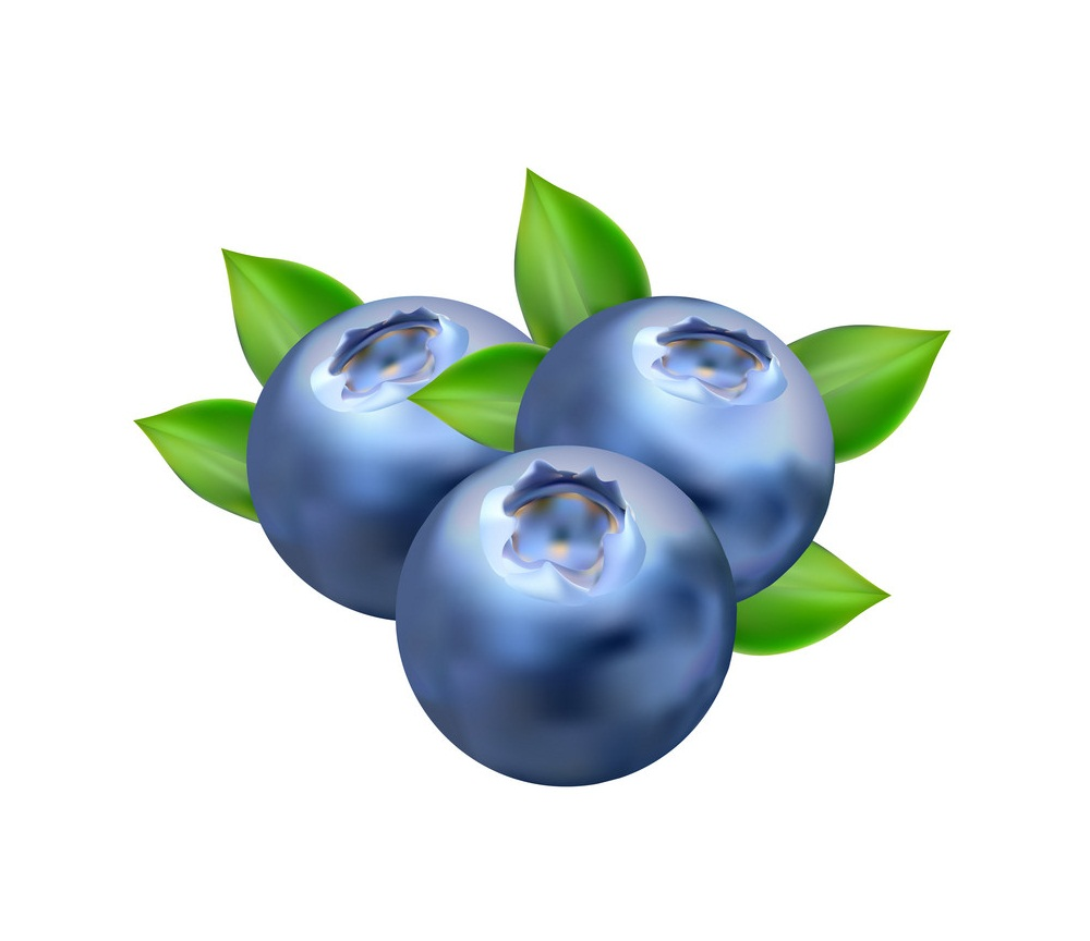 realistic blueberries