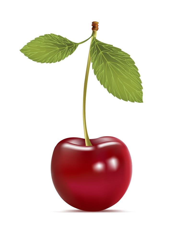 realistic cherry