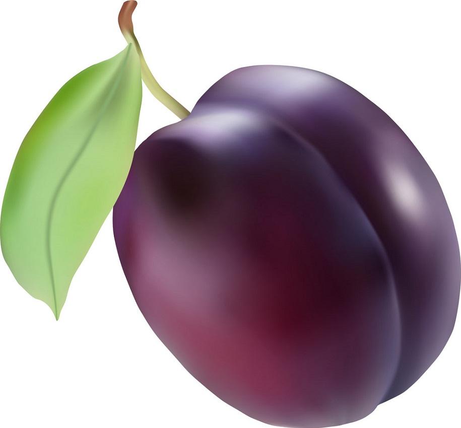realistic detailed plum fruit