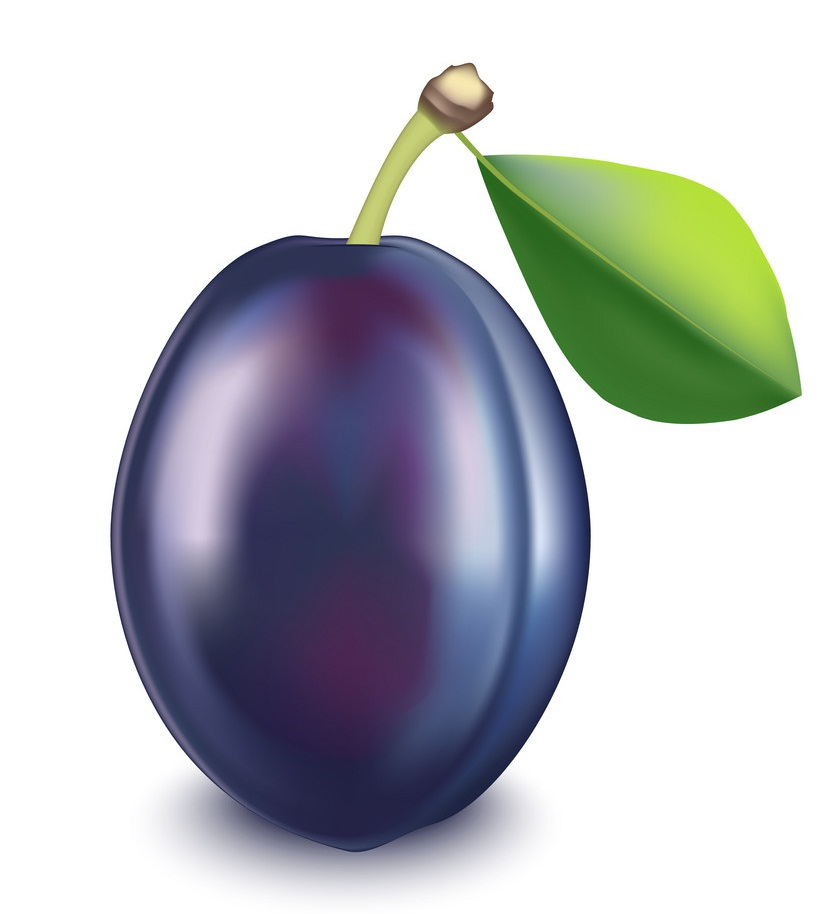 realistic detailed plum