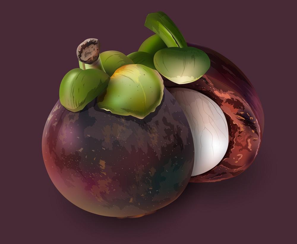 realistic mangosteen on purple background