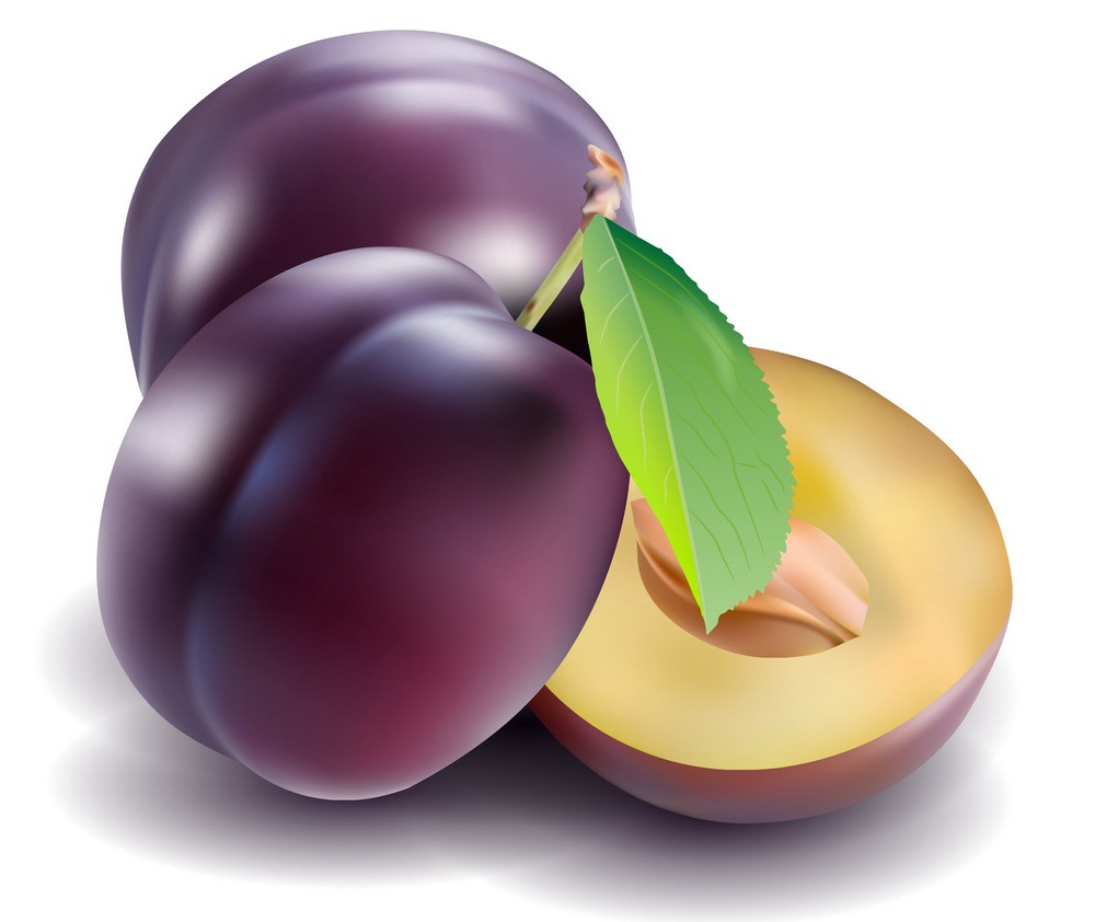 realistic plums