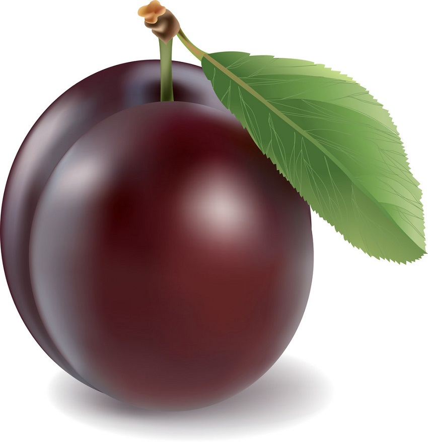 realistic red plum