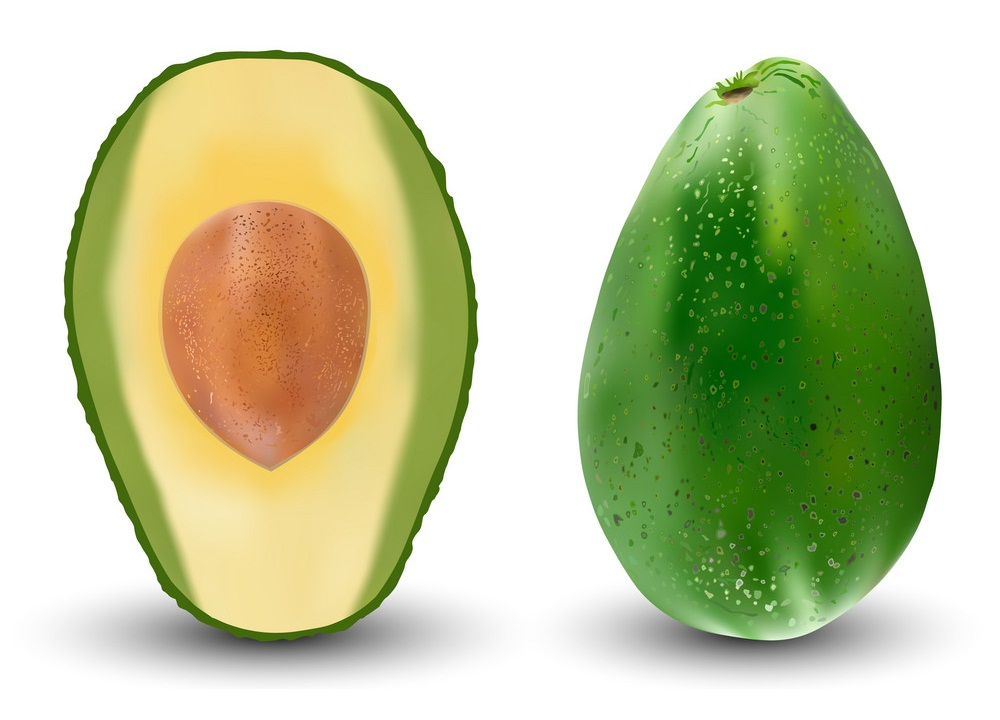 realistic whole and half avocado
