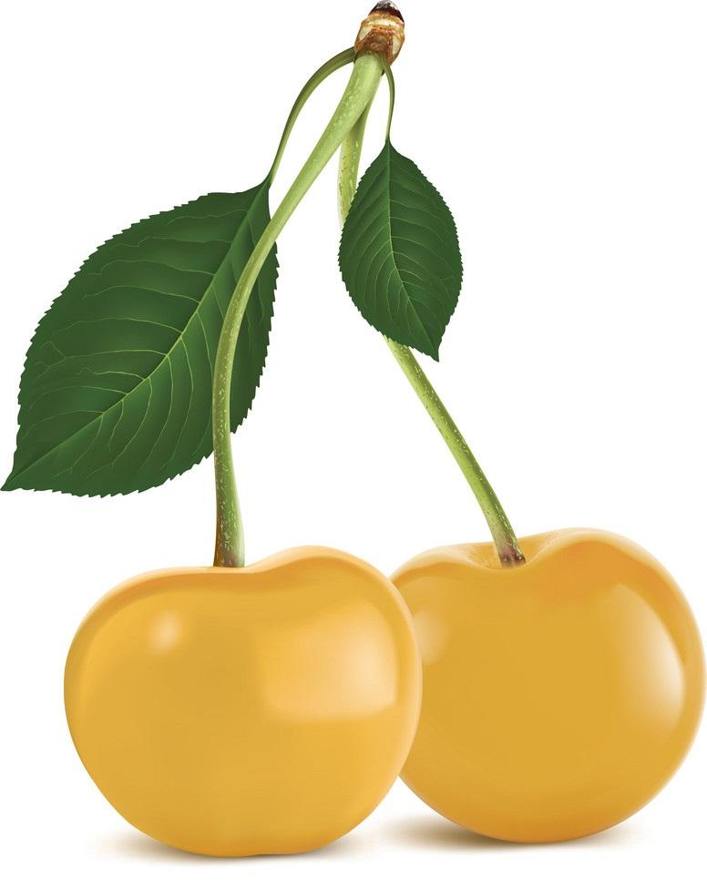 realistic yellow cherry