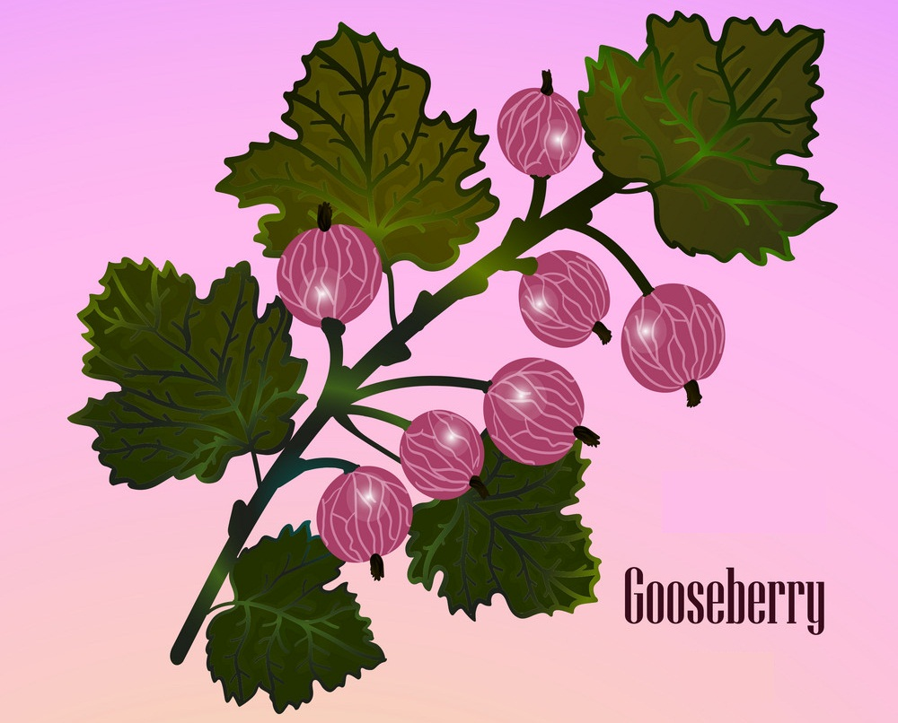 red gooseberries on a branch
