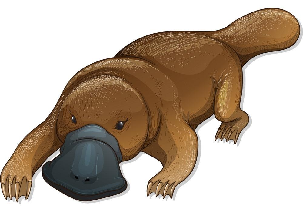 Platypus Clipart