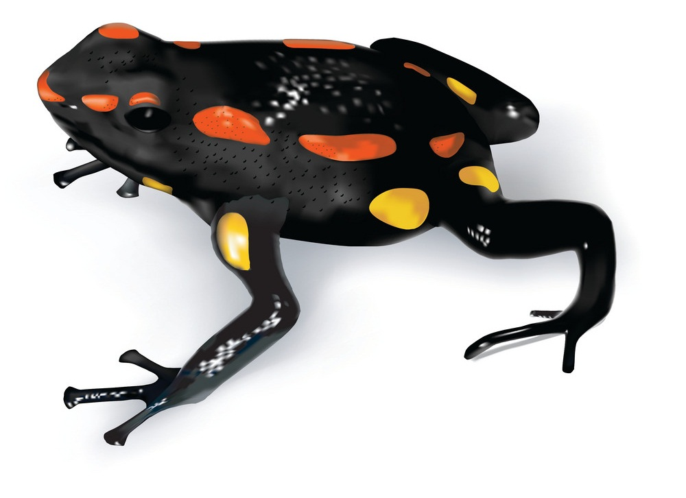 rio santiago poison frog