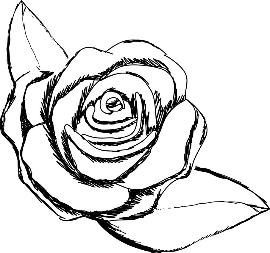 rose and leaves outline 1