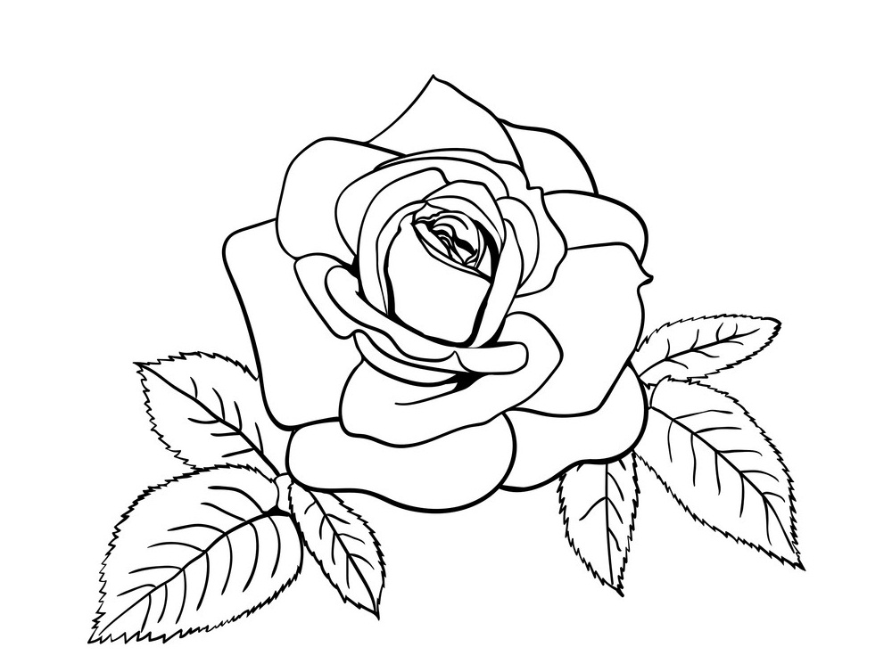 rose and leaves outline 2