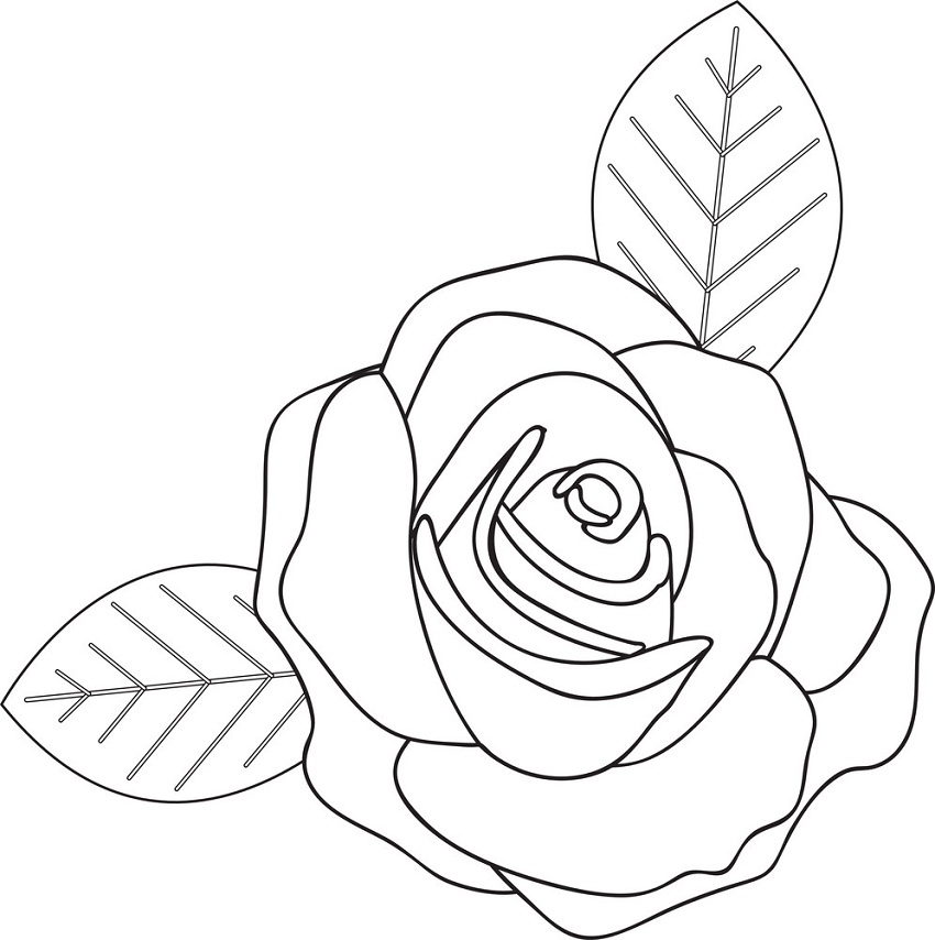 rose and leaves outline