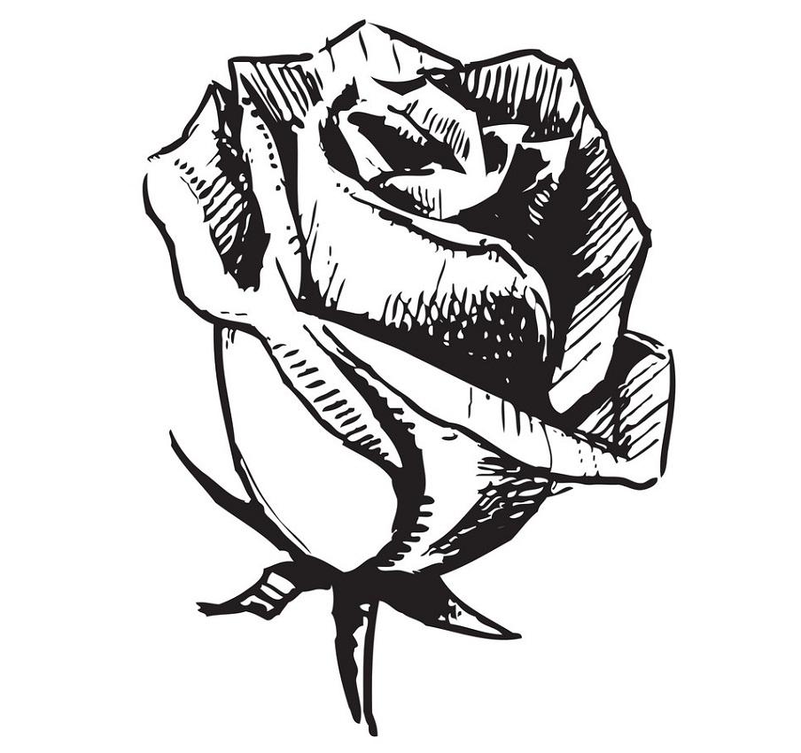 rose bud outline